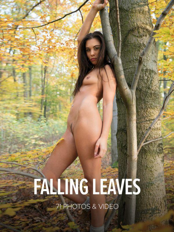 Sabrisse - Falling Leaves x72 4000px (11-18-2018)